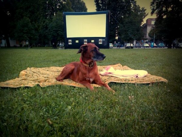 FOTO: kino u mom kvartu promo materijal