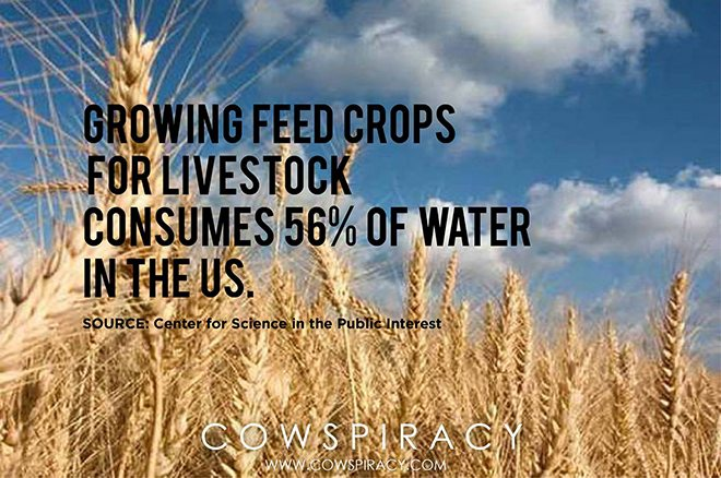Foto: facebook.com/cowspiracymovie