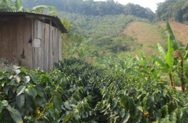 Foto: plantaža kave, safari-black.tumblr.com