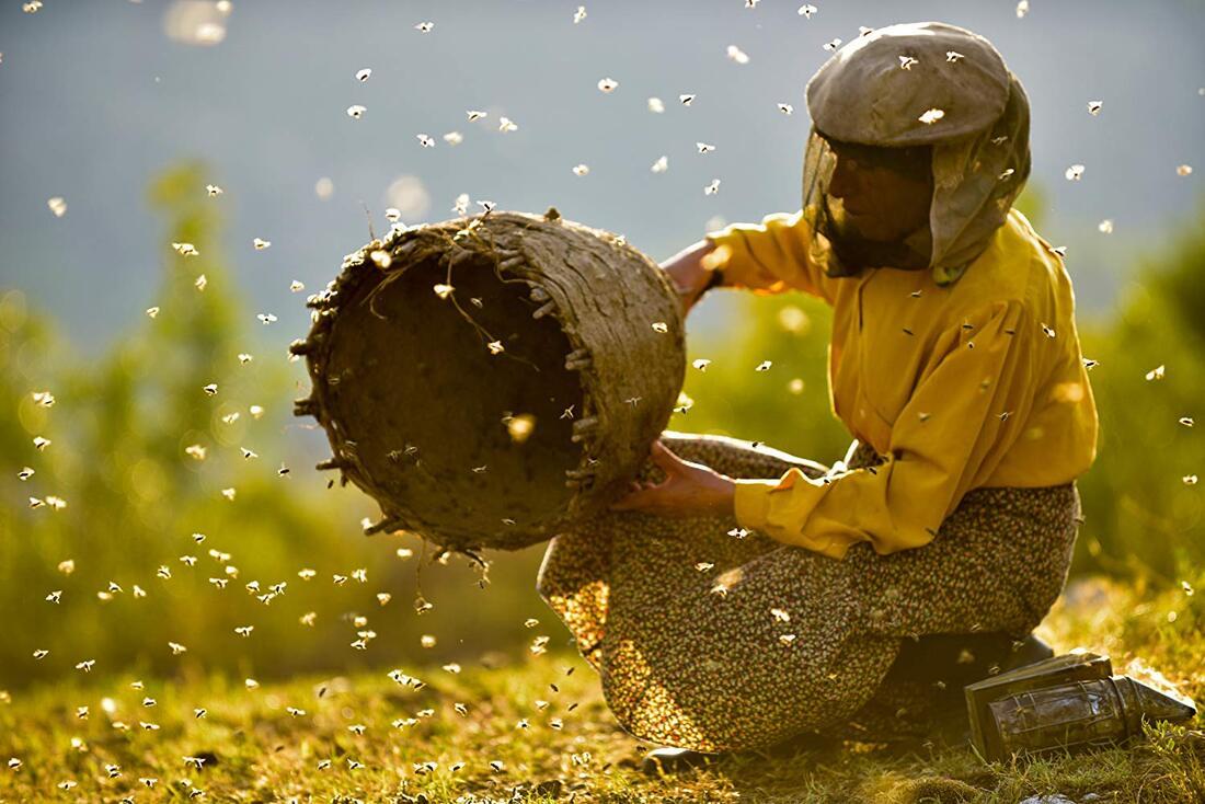 MEDENA ZEMLJA: Jedna od povijesti pčela i njihova čuvarica